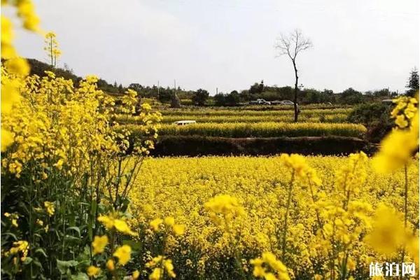 南京金牛湖油菜花在哪里
