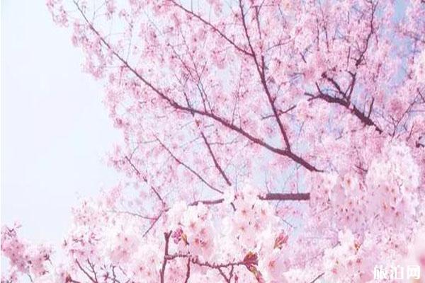 樂清春季賞花景點推薦