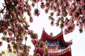 济南春季赏花景点