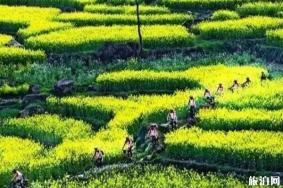 安徽春季旅游最佳