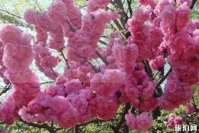 佛山南国桃园桃花