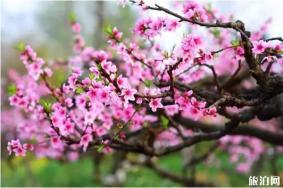 陕西哪里桃花最美