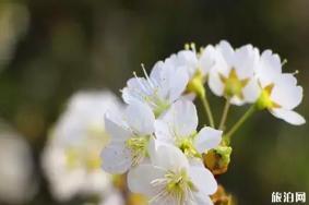 春季安康赏花的地