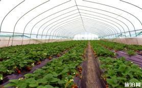 貴州鎮遠草莓采摘園在哪里