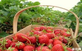贵阳花溪区草莓种植园草莓采摘价格多少钱
