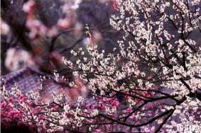 江苏春季赏花的地