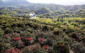 2020贵州百里杜鹃景区恢复开放时间-优惠政策