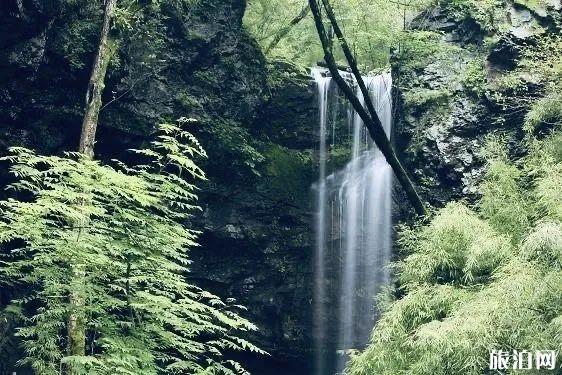 五龙洞国家森林公园三八妇女节免费门票