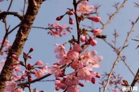 汕头丹樱生态园门票优惠措施多少 2月份恢复开放2020