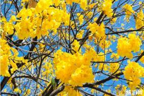 2020年三月广东哪里有花看