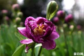郴州南岭植物园门票 郁金香开了吗