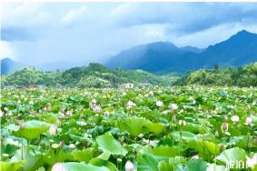 绥宁黄桑风景区门票多少 在哪和旅游路线推荐