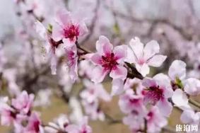 衡阳哪里有桃花看