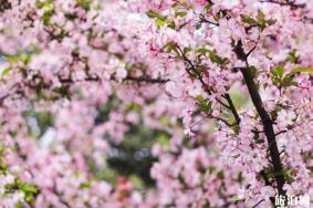 贵州春季赏花去哪里 贵州赏花地点及门票