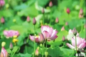 湖南省植物园疫情期间开放了 附预约方式