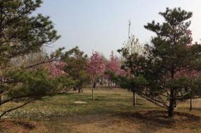 2020北京国际雕塑公园玉兰赏花季取消