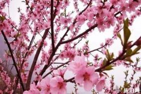 成都东来桃源景区怎么样 景点分布-桃花