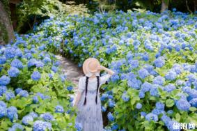 夏天去日本哪里旅游好 日本夏季赏花时间