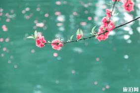 苏州春季赏花去哪 2020苏州赏花景点恢复开放