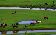 丰宁坝上草原在哪 游玩攻略