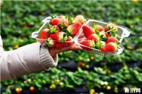 徐州草莓采摘园在哪里 采摘地推荐