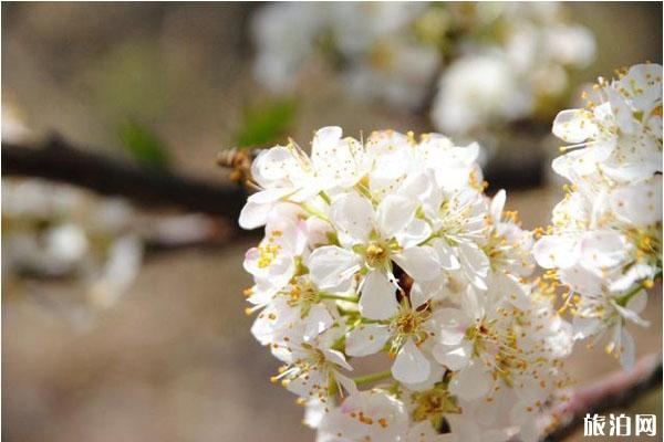 玉溪赏花地有哪些 赏花地推荐