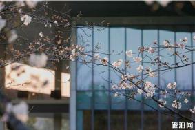 2020杭州大屋顶樱花季 今年开放吗-活动介绍