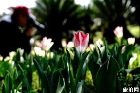 2020上海鲜花港郁金香花展 持续时间-入园提示