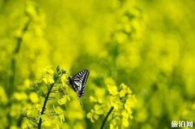 无锡阳山春天赏花的地方推荐