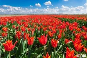 昆山巴城荷兰郁金香花节多久举办