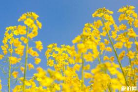 2020苏州赏花可以去哪些景点