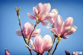 南阳赏花的景点介绍