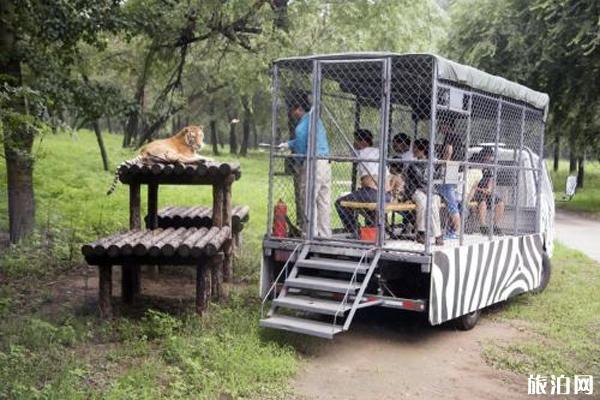 北京野生动物园疫情期间开放了吗 附开放时间-预约2020