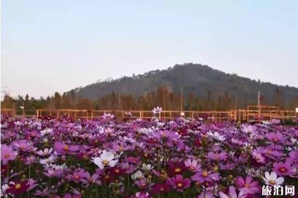珠海十里莲江农业观光体验园门票多少钱