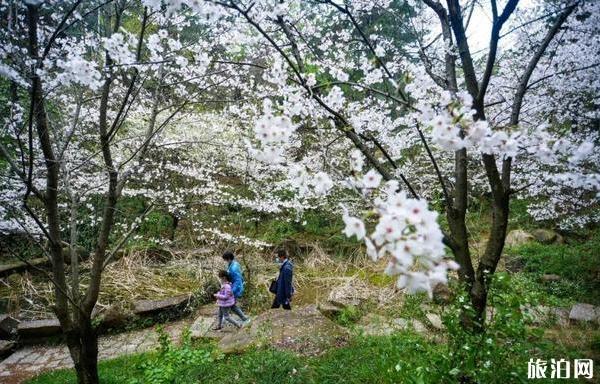 苏州看樱花的地方有哪些