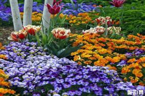 北京世界花卉大观园里面有吃的吗 什么时候有花
