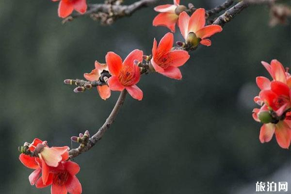 2020广州春季赏花好去处