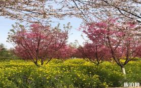 郑州丰乐樱花园门票 怎么导航-停车哪里方便