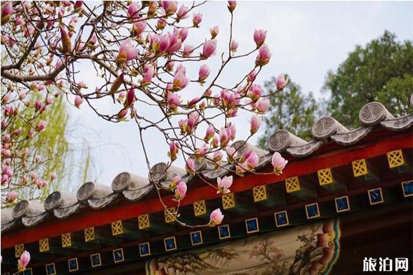 北京中山公园梅花在哪里 盛开图片