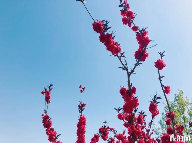 北京園博園賞花春游