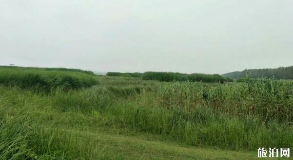 武漢府河濕地公園游玩攻略
