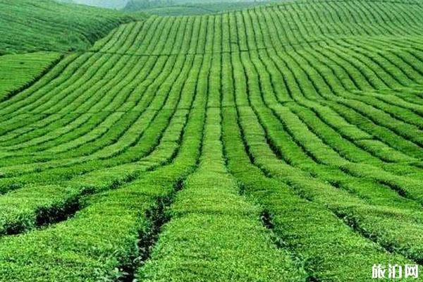 2020貴州茶海之心 茶海之心門票交通景點介紹