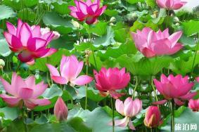 2020沈陽仙子湖風景度假區介紹 仙子湖垂釣-船票價格