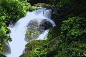 2020貴州大板水國家森林公園 大板水國家森林公園門票交通景點介紹