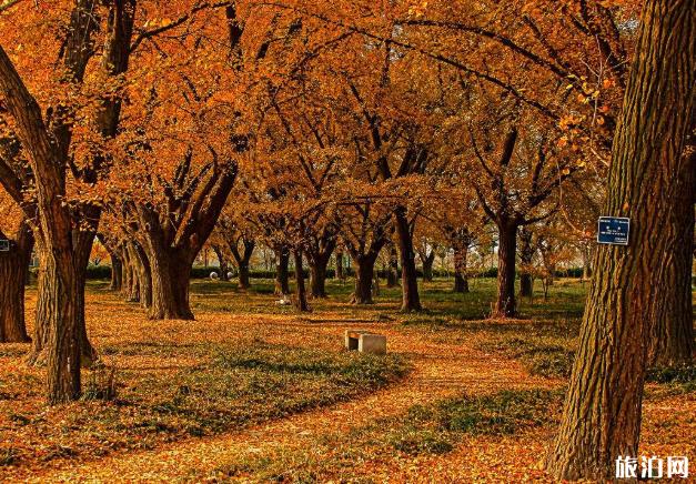 2020泰兴古银杏群落森林公园门票及游玩攻略
