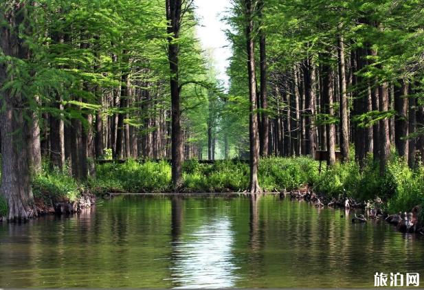 2020李中水上森林公園門票交通及游玩攻略