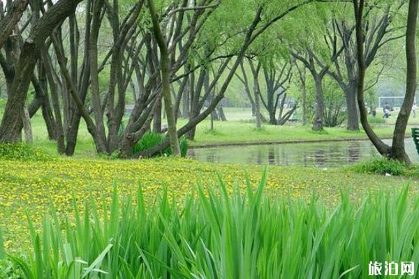 2020上海共青森林公園預約入口