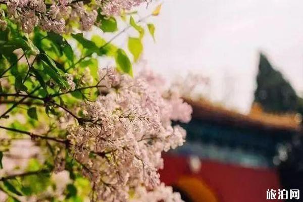 2020北京公園預約平臺 北京哪些公園要預約