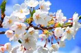 青島哪里可以賞花 附景點介紹-交通指南
