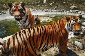 秦嶺野生動物園免費預約方式-時間